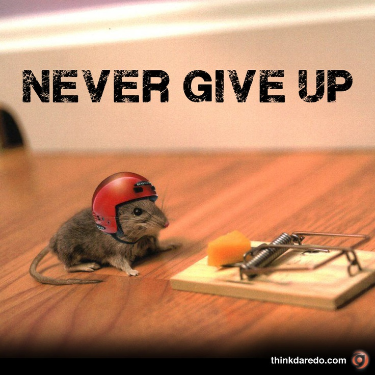 Never give up Repin it to share the courage of this