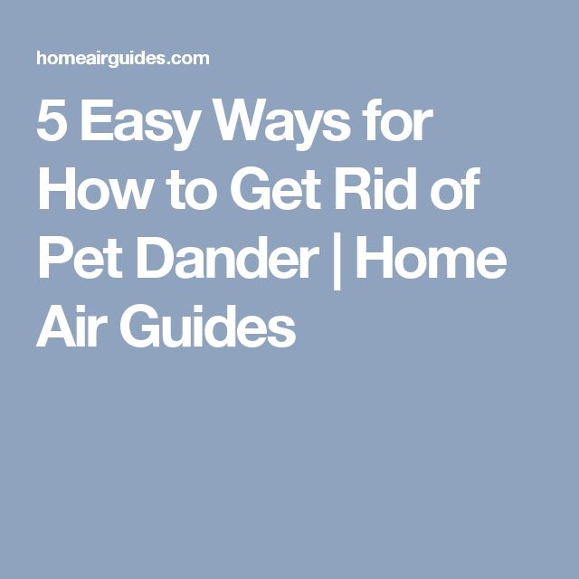 5 Easy Ways for How to Get Rid of Pet Dander | Home Air Guides