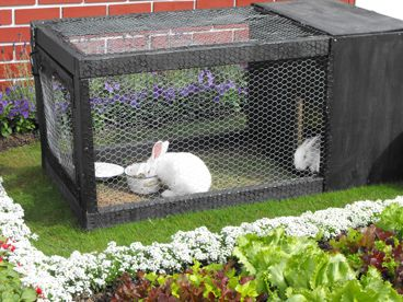 We took our NZ White rabbits along as well.  During the war rabbit meat and fur was very popular