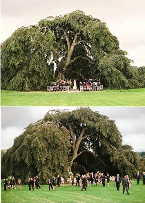 i don't want to do that but i think its really cool: Ideas, Exact Trees, Dreams, White Lights, Awesome, Weeping Willow Trees Wedding, Trees Canopies, 500700 Pixel, Big Trees