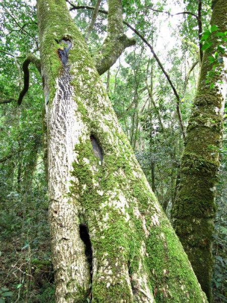 Garden of Eden Forest in Knysna