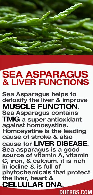 JOJO POST FOREVER YOUNG: Sea Asparagus helps to detoxify the liver & improve muscle function. Sea Asparagus contains TMG a super antioxidant against homosystine. Homosystine is the leading cause of stroke & also cause for liver disease. Sea asparagus is a good source of vitamin A, vitamin C, iron, & calcium. it is rich in iodine & is full of phytochemicals that protect the liver, heart & cellular DNA.