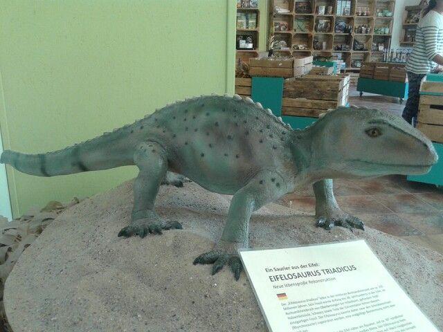 Reconstructie Eifelosaurus Dinopark Ernzen.  Skelet gevonden bij Hillisheim Eifel Duitsland