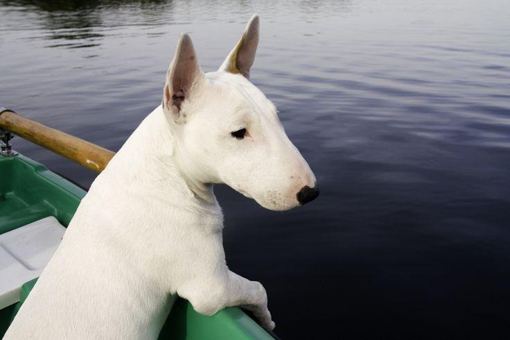 Pies na łódce:)