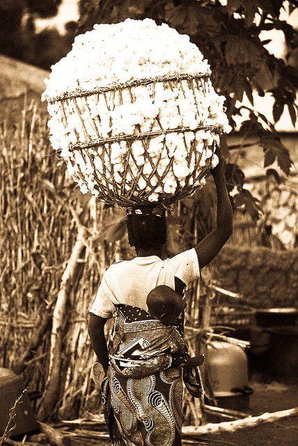 Cotton harvest . Koina village Cameroon