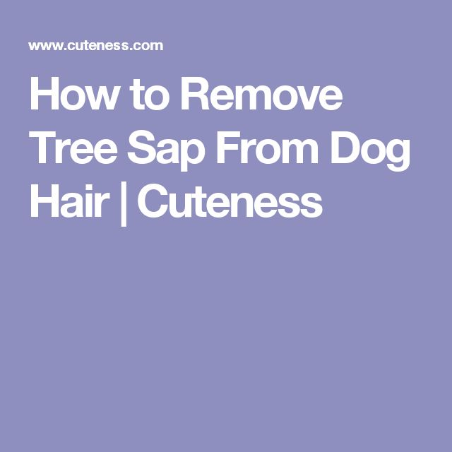 How to Remove Tree Sap From Dog Hair | Cuteness