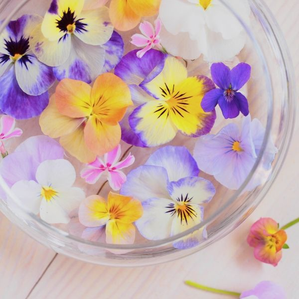 三色すみれの浮き花