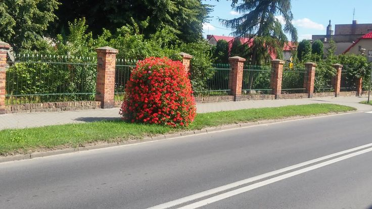 Terra Flower Power | Wieleń