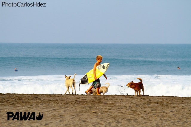 Little Alan walking down the beach.. #pawayouth #pawasurf #grom #gromsurfer #littlesurfer #surfing #surf