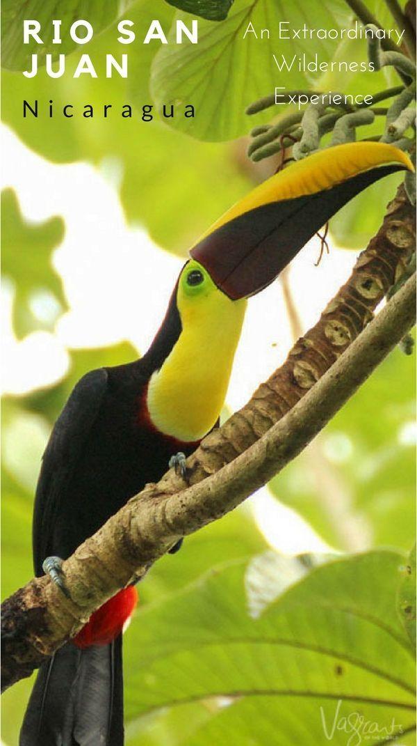 The Rio San Juan Nicaragua is extraordinary wildlife, rugged nature and incredible hospitality.