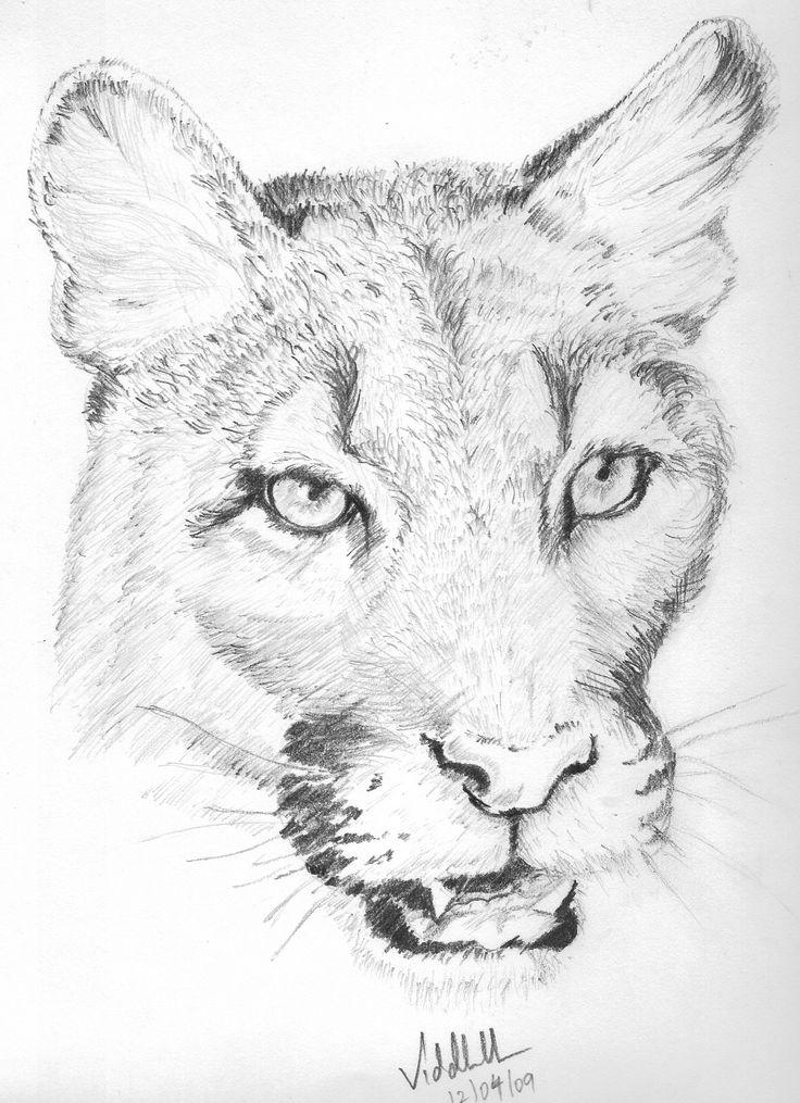 pencil drawings animal sketch sketches animals simple sketching wildlife easy drawing shade jaguar pencils pencile ref