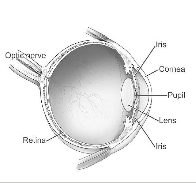 Labeled Eye Diagram Eye Anatomy Diagram Eye Anatomy Diagram Of The Eye