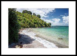 Tiritiri Matangi New Zealand Shoreline II Framed Print by Joan Carroll