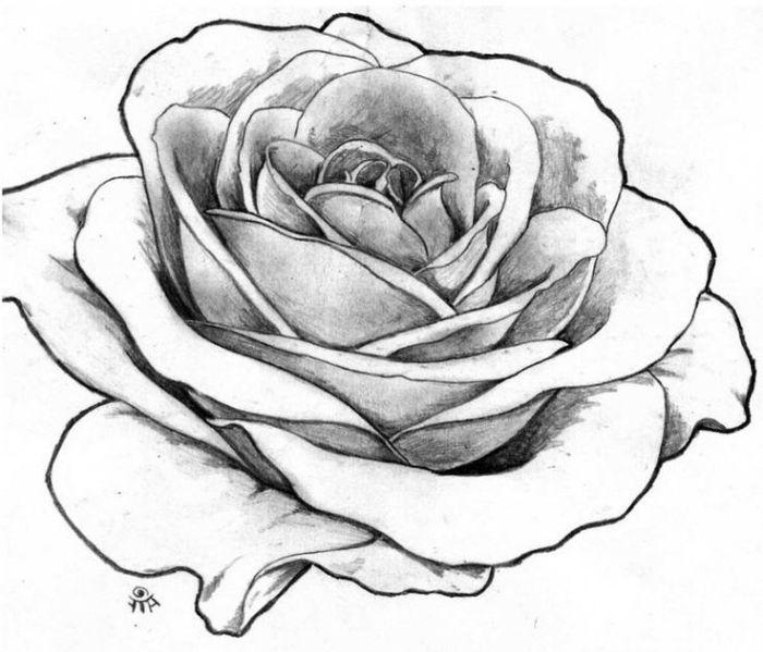 1001 Modeles Et Conseils Pour Apprendre Comment Dessiner Une Rose Dessin Rose Comment Dessiner Une Rose Dessin Fleur