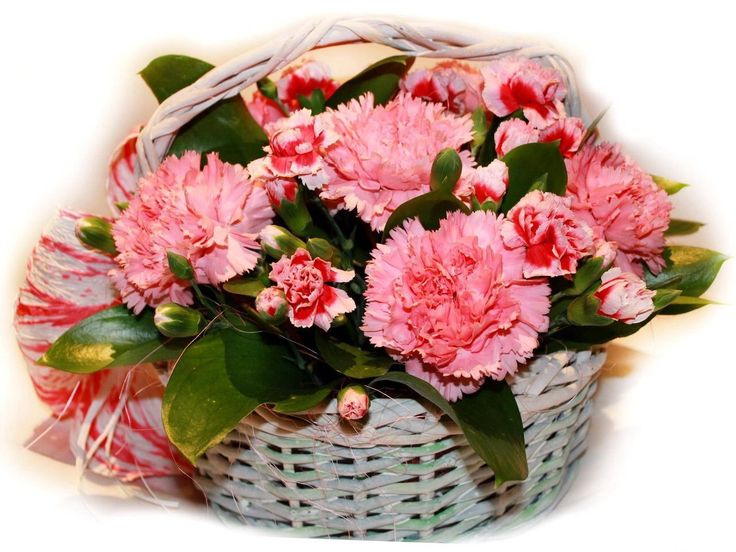 1543 best Arreglos florales images on Pinterest Floral