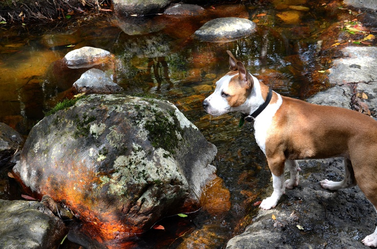 Another of the pooch - at Wappa Falls