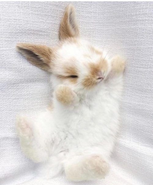 Cutest bunnies of the day – Animals