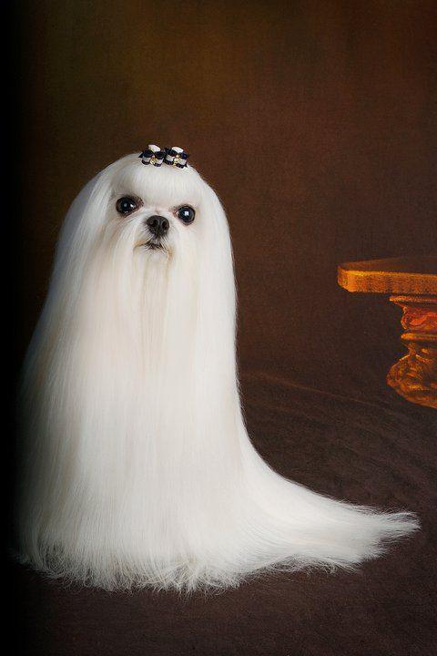un fantasma muy hermoso :3