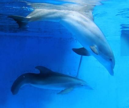 And she's cool living with her pool-mate, Hope.   How Winter The Dolphin Inspires The World
