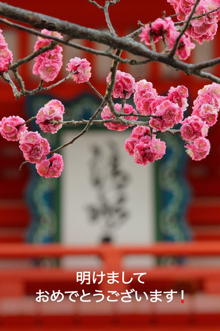 Happy New Year To Our Friends Around The World Happynewyear World Tofu Beautiful Flowers Pictures Cherry Blossom Japan Beautiful Flowers