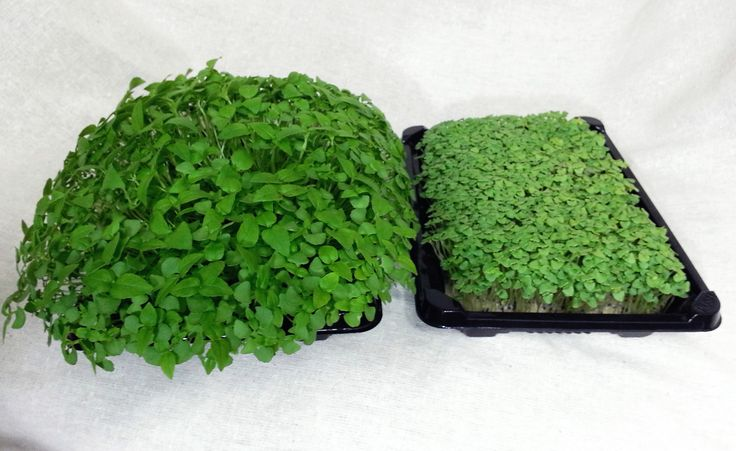 1000 images about sprouts microgreens on pinterest for Soil vs hydro