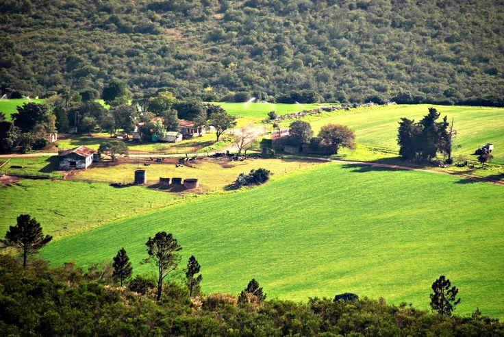Landscape near Grahamstown, South Africa.