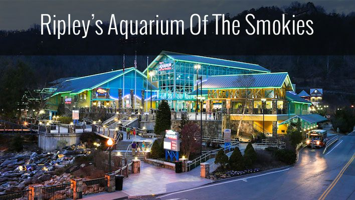 Read all about our recent trip to Ripley's Aquarium in Gatlinburg TN.  One of the top aquariums in the US!