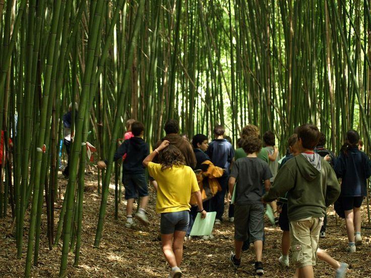Banbu-basoan barrena... / Adentrándonos en el bosque de bambú...