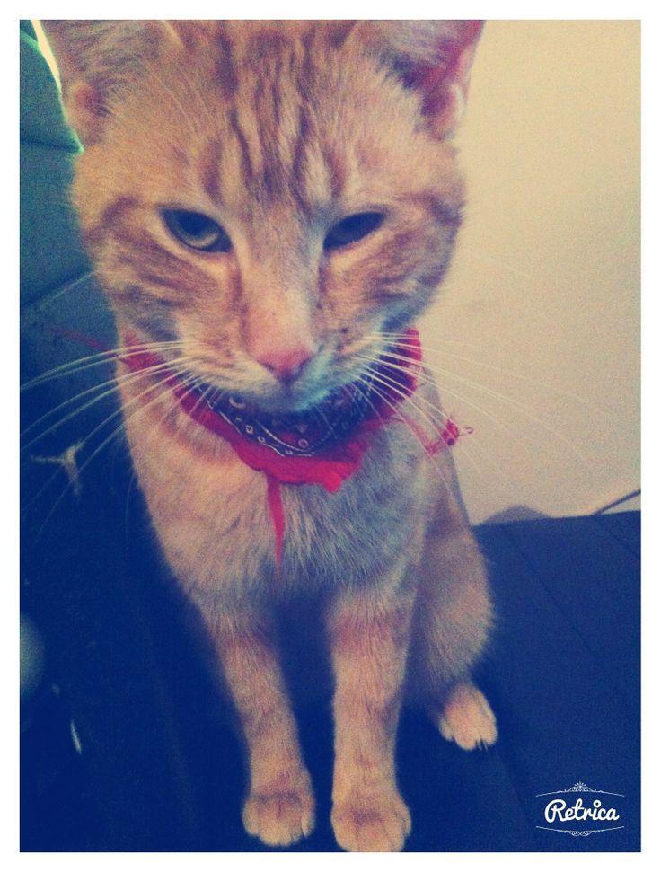 Bad-Boy Cat lol =) photo prise avec application iphone Retrica ;)