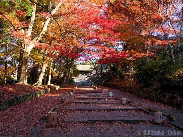 錦秋の毘沙門堂 (Bishamon-do in autumn)