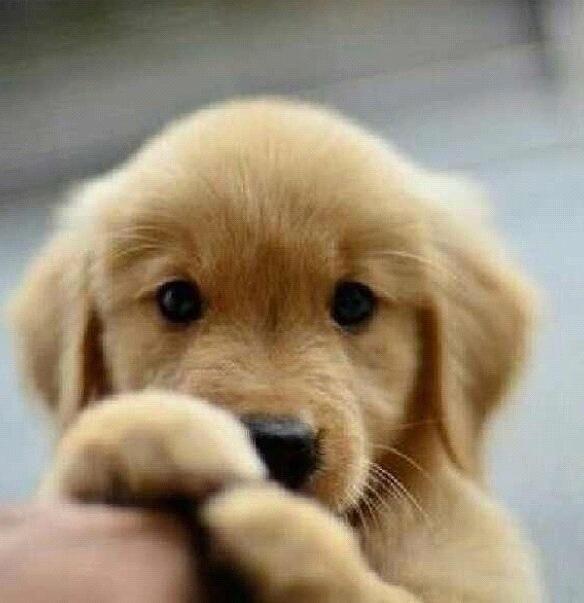 Adorable puppy...
