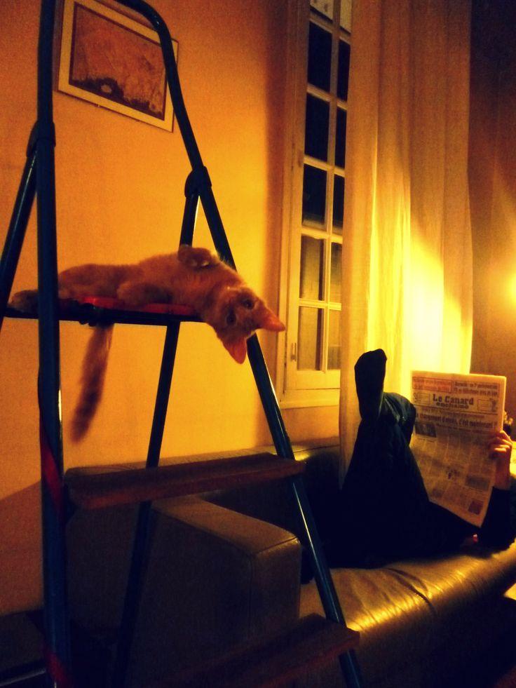 36 Rue Mignet. Chat, escabeau, canard enchaîné.