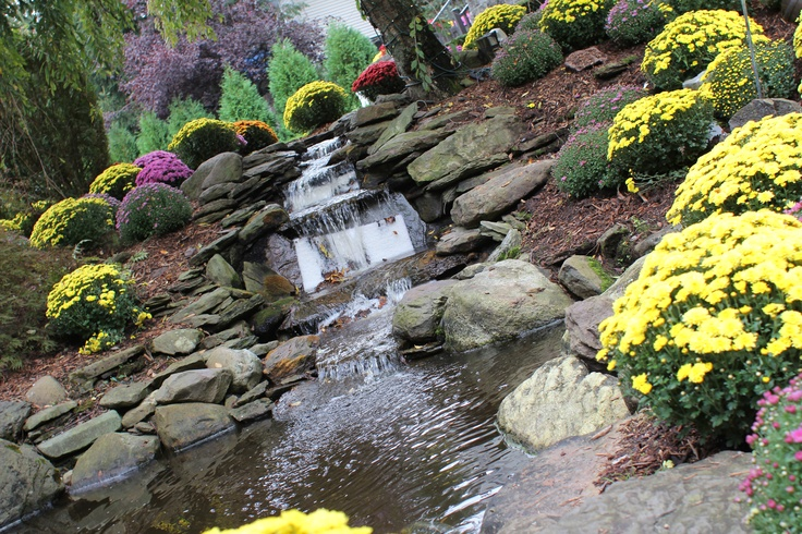 Backyard goldfish pond waterfall valley regency nj for Goldfish pond