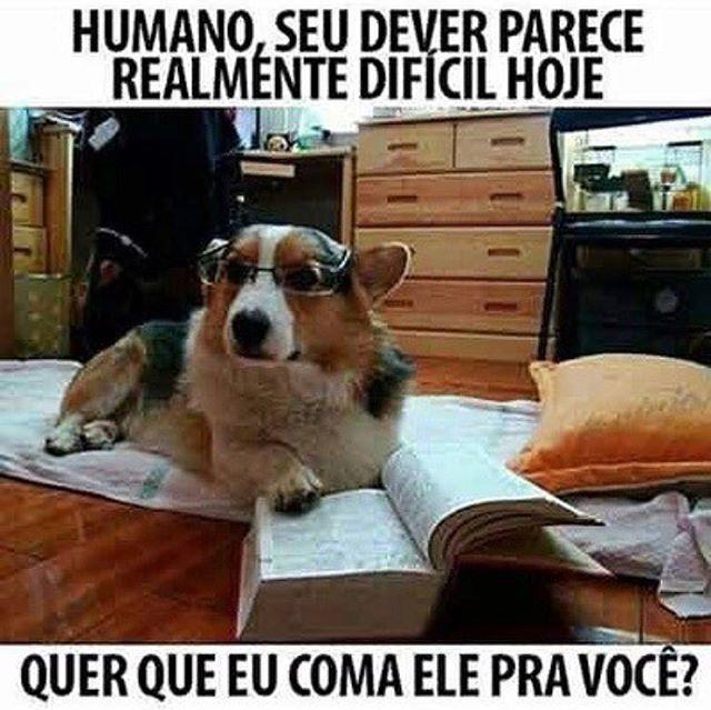 SIMMM POR FAVOR!!   #amocachorro #filhode4patas #paidecachorro #maedecachorro #maedepet #caopanheiro #cachorro #cachorro étudodebom #cachorroterapia #petmeupet
