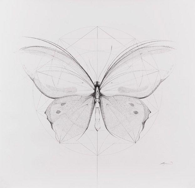 http://jessicaalbarn.co.uk/drawing/images/BirdwingButterfly.jpg