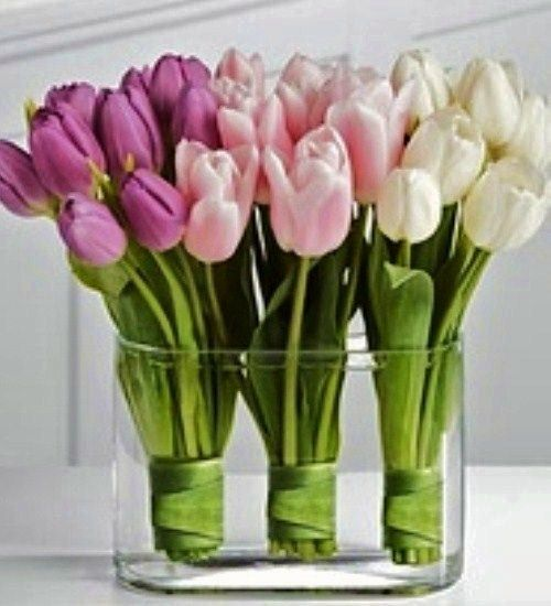 3 bunches wrapped - Classic Chic Home ~ Tulips
