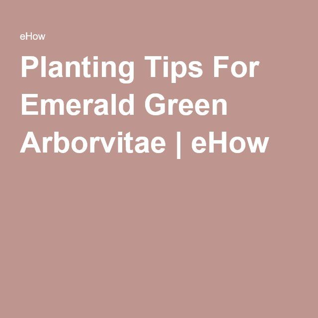 Planting Tips For Emerald Green Arborvitae | eHow