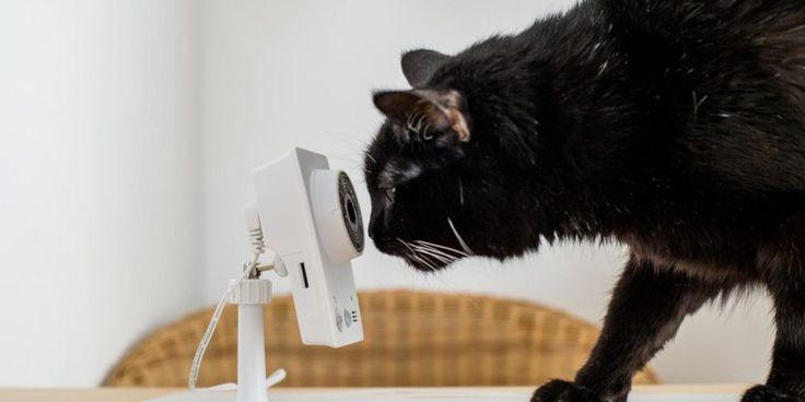 Racker allein Daheim – Katzen mit Überwachungskamera gefilmt: http://tiersos.de/racker-allein-daheim/ #Katze #Catcontent #Viral