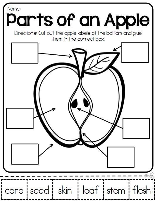 Apple Life Cycle Worksheets - Mamas Learning Corner
