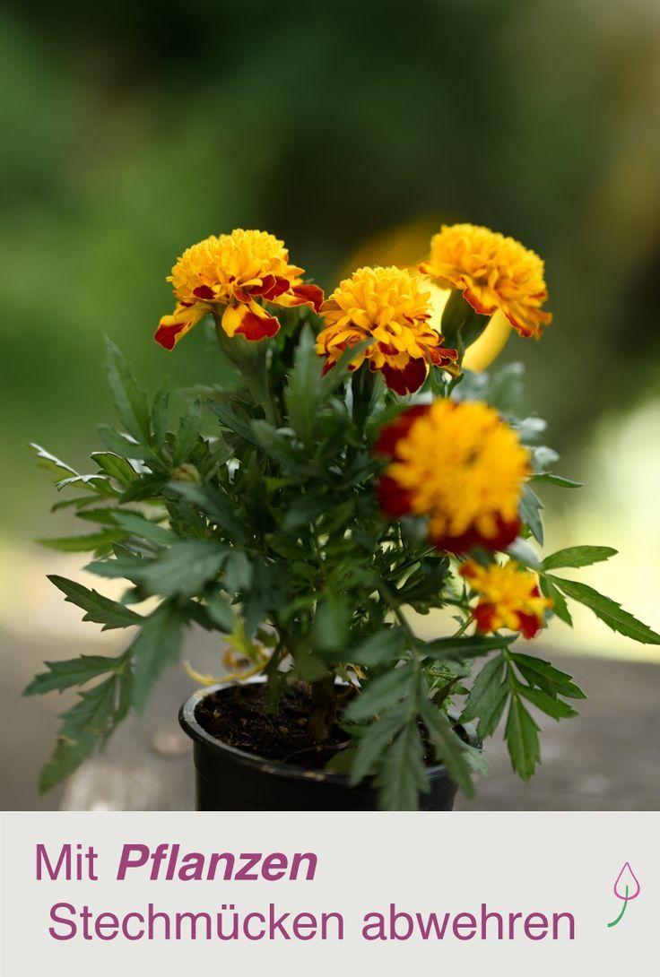 9 Pflanzen Gegen Mucken Auf Balkon Terrasse Oder Im Garten Pflanzen Gegen Mucken Pflanzen Bepflanzung