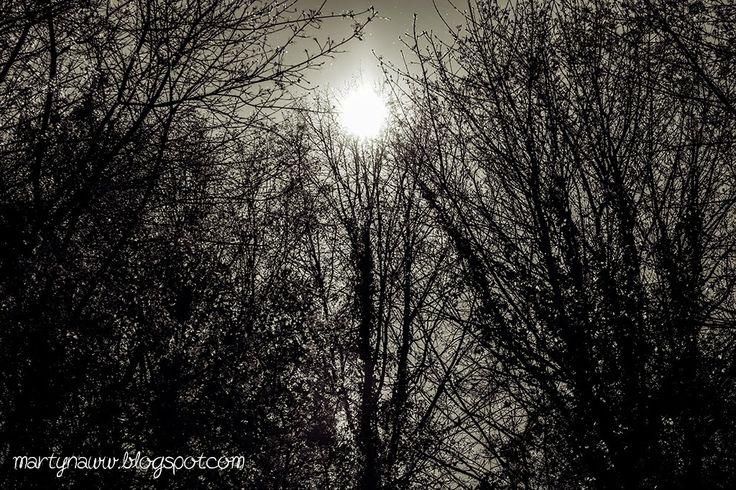 Trees / Park