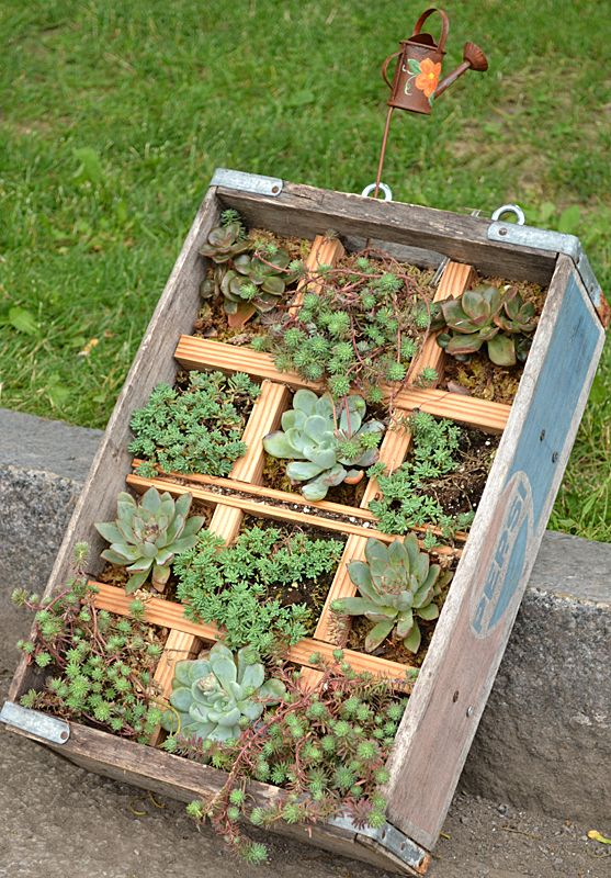 A wooden soda pop crate holds succulents in this container garden that can be hung on a fence or garage wall to provide interest at eye level in your yard. The succulents don't have to be watered as often as other plants do. BarbaraCarter tied for third for this design in the traditional category in a container competition that was part of the Lewiston GardenFest in June 2013. The events are part of the National Garden Festival held each year in the Buffalo area.