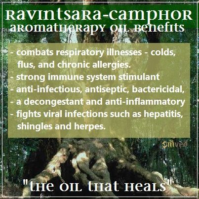 Also known as the organic Camphor tree, Ravintsara is revered for its many healing properties. This camphoraceous oil—which, oddly enough, contains no actual camphor—has long been used to combat respiratory illnesses including colds, flus, and chronic allergies. A strong immune system stimulant, Ravintsara has strong anti-infectious, antiseptic, bactericidal, and expectorant therapeutic properties. Its decongestant and anti-inflammatory properties also make it effective in clearing the…