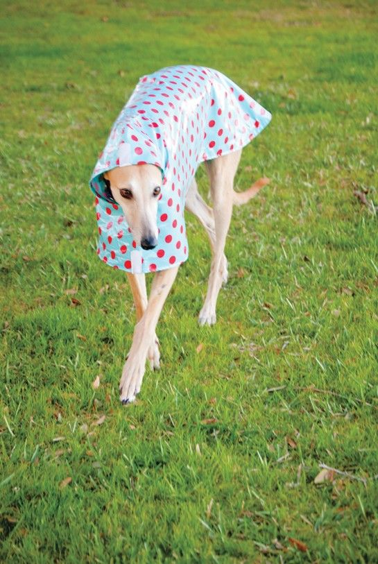 Dog Raincoat Slicker - Red Polka Dots on Turquoise. $74.00, via Etsy.