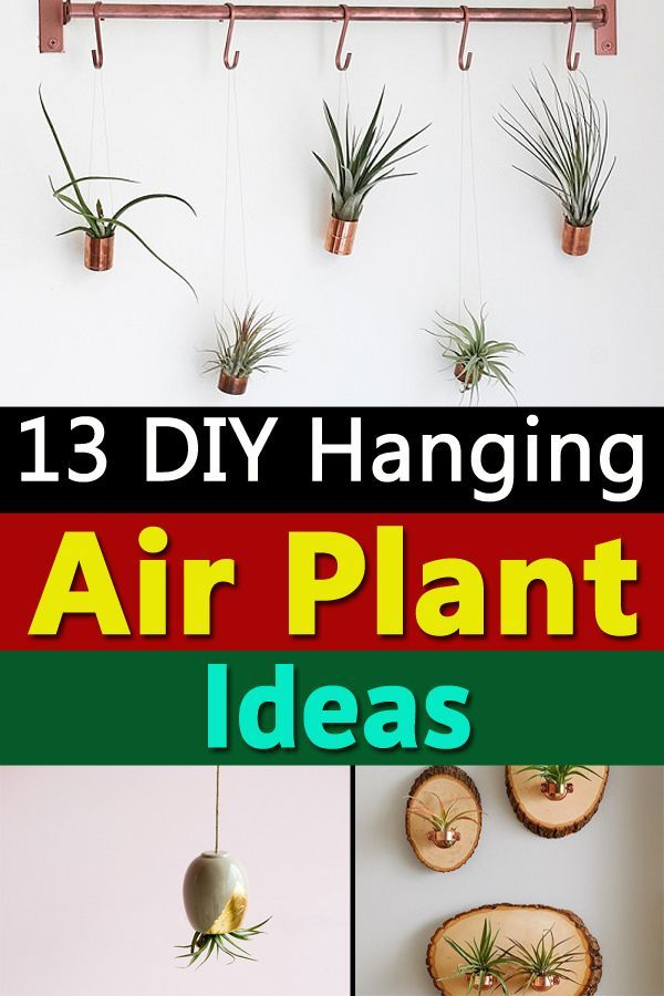 Learn How To Make Hanging Air Plant Holders At Minimal Cost And In No Time Enhance Your Display Airplant Diyideas Indoorplants