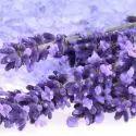 Lavanda, planta medicinal de propiedades calmantes
