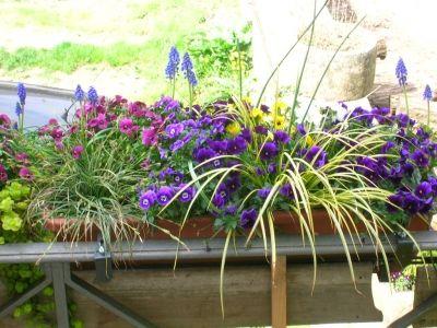 Les 12 meilleures images propos de balcons en fleur sur - Fleur de jardiniere ...