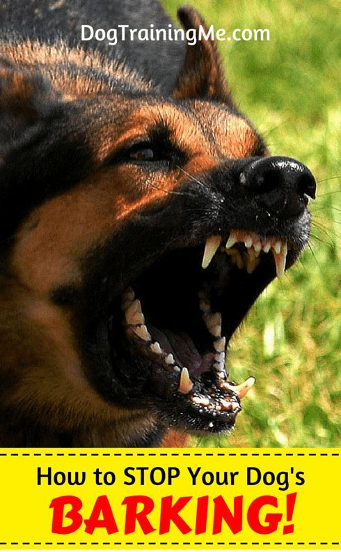 How to stop dog barking. Find out why the number one reason people think their dog barks is WRONG! Learn the actual cause, and get 9 tips to stop dog barking by reading this article!