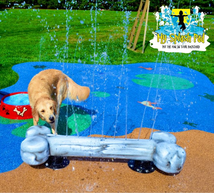 Diy Splash Pad For Dogs: Best 25+ Dog Pools Ideas Only On Pinterest