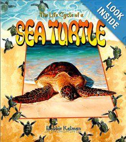The Life Cycle of a Sea Turtle: Bobbie Kalman: 9780778706823: Amazon.com: Books